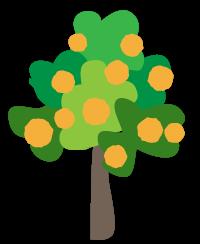 大きな伊予柑の木